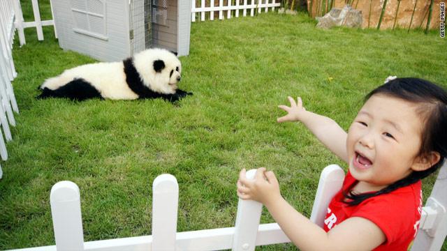panda-dog-1